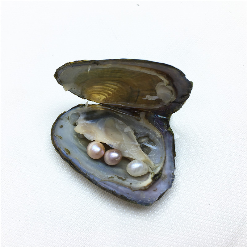 Oyster Pearl Gemstone Bead Natural Freshwater Pearl For Freshwater Cultured Rice Bead Accessory Jewelry For Women Wholesale