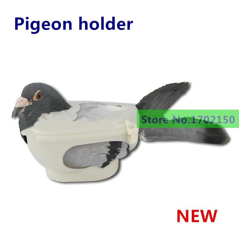 write about pigeon bird