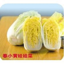 Small yellow baby spring vegetables bonsais Vegetable bonsais 100pcs(China)