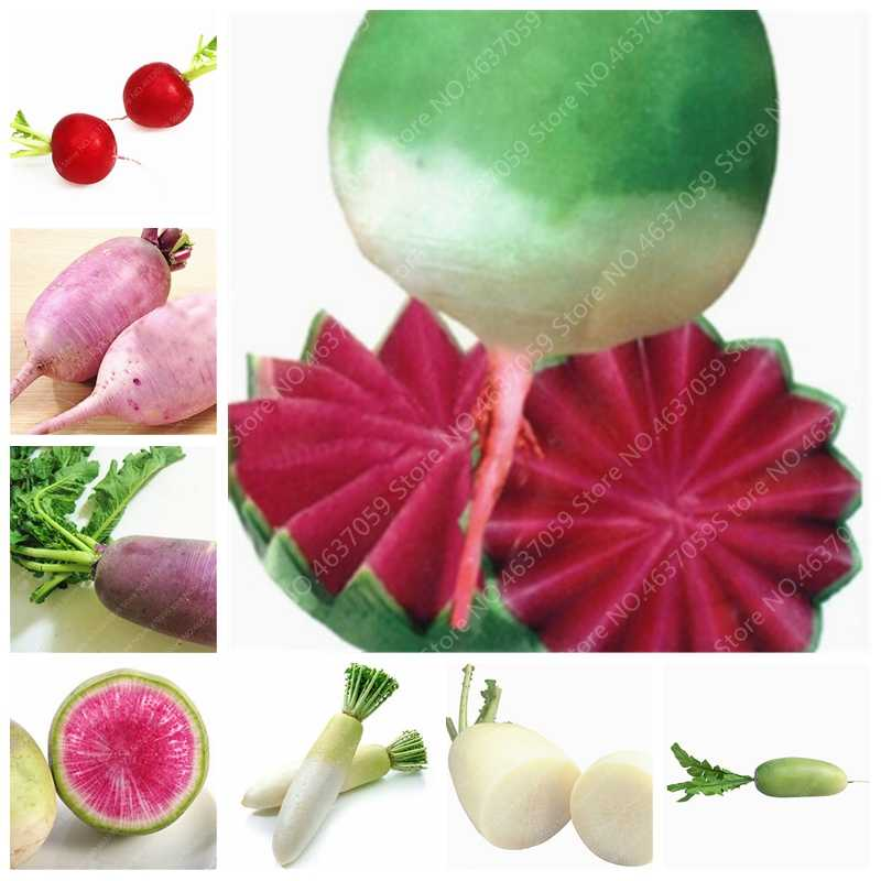 100 Pcs Juicy Radish Bonsai 100% Real Radish Delicious Sweet Vegetable Organic Home Garden Potted Planta Winter Vegetable