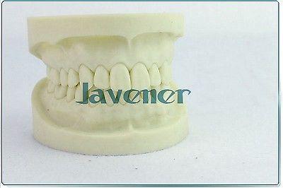 Dental Teeth Model Tooth Teaching Model High Quality Simulation good quality dental removable dental model dental tooth arrangement practice model with screw teaching simulation model