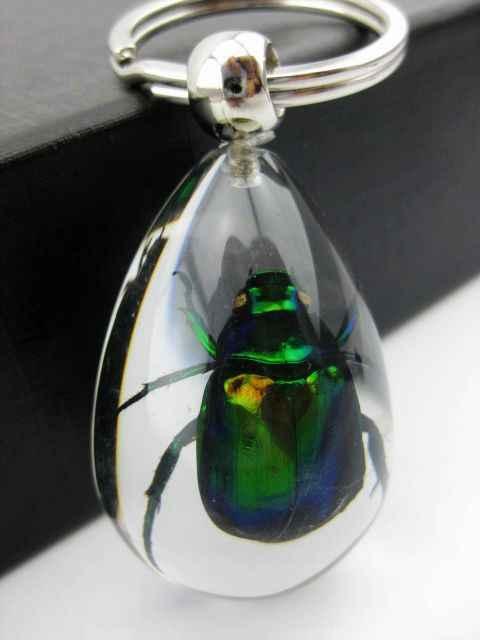 Il trasporto libero di alta qualità 12 pz colorful scarabeo metallico brillante insetto specimen portachiavi: chiaro tassidermia gl1