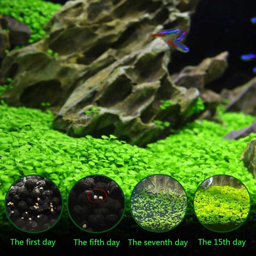 Aquarium Plant Seed Glossostigma Hemianthus Callitrichoides ปลูกง่าย Water Grass Fish Tank Landscape Decor ตกแต่ง