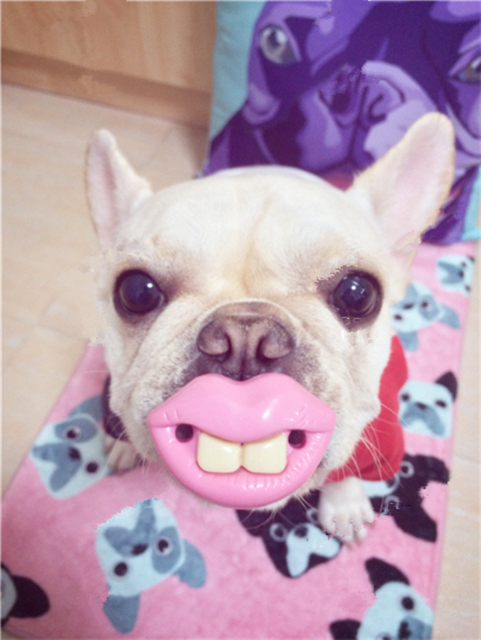 2014 Creative Funny Pet Dog Toys Red Lip and Teeth Pet Toys 100% Safe Dog Toys Gifts for Dogs Pacifier for Dogs