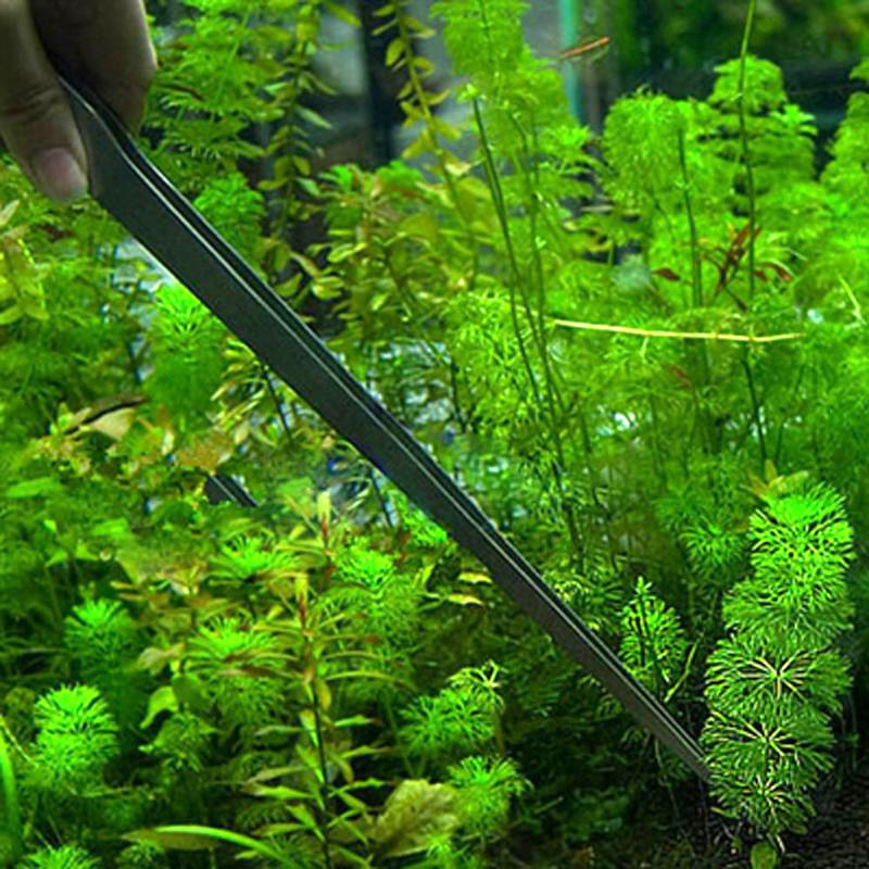 Stainless Steel Curved Aquarium Tweezers Aquarium Plant Shrimp Reef Tweezer Aquarium Accessories Fish Tank Cleaner