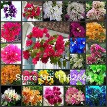 50 * mix-цветные Бугенвиль Spectabilis Willd Семена Бонсай Цветок Растений