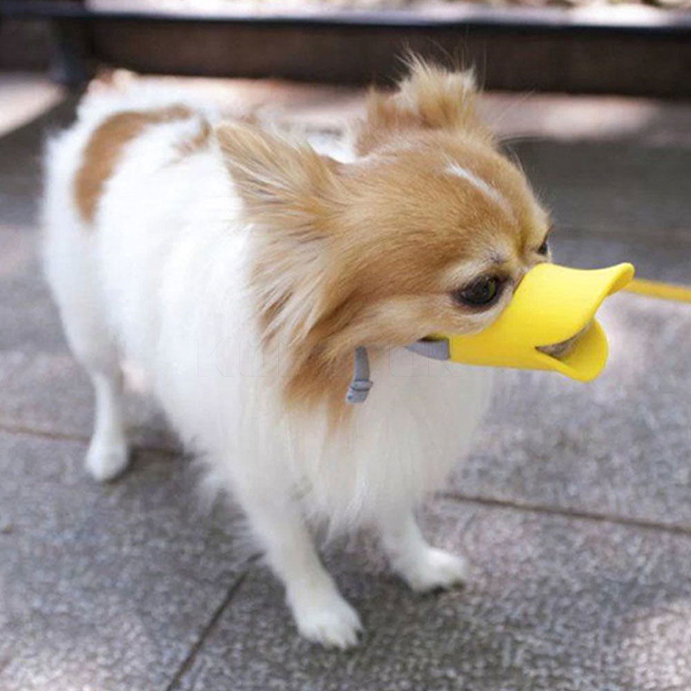 Duck Dog Training Supplies