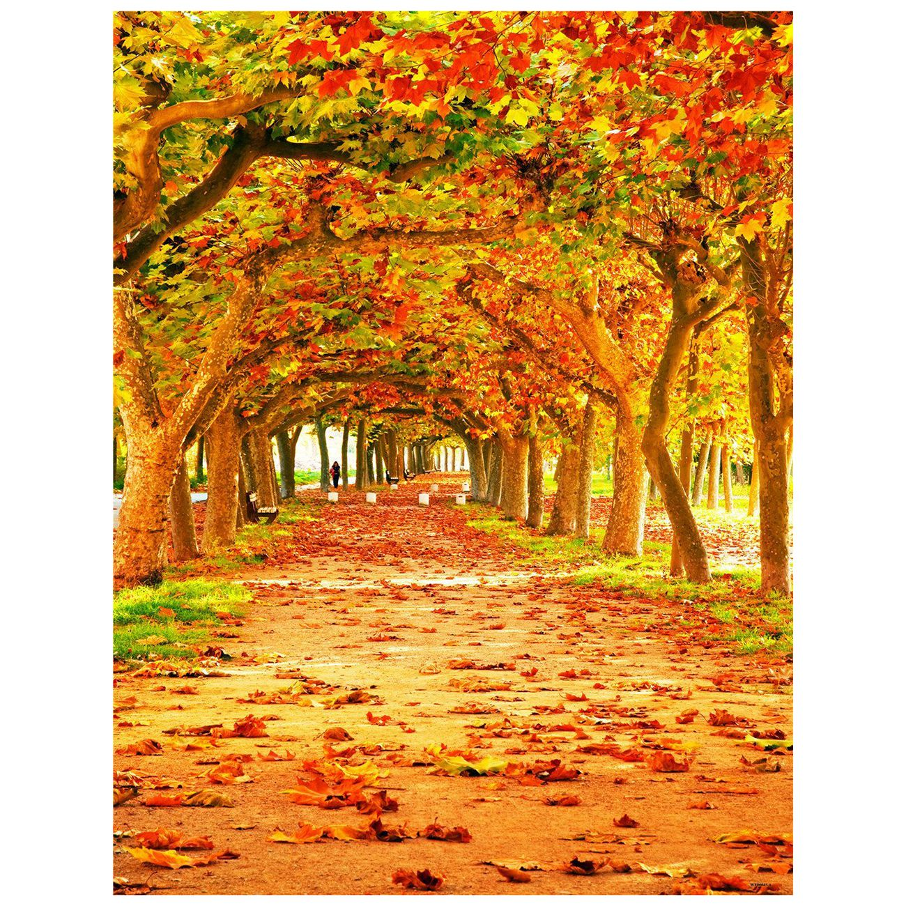 3x5ft Yellow Natural Scenic Photography Backdrops Autumn ...