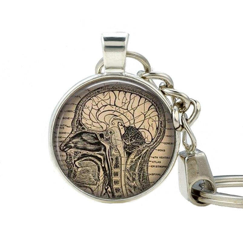 Anatomisches Herz schlüsselanhänger Menschliche Gehirn Anatomie ...