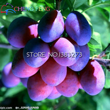 10pcs Black Brin Plum Seeds Very Tasty Prune Fruit Seed Tree Jardin Seeds Vegetables And Fruits Pot Plant Easy Grow Free Ship