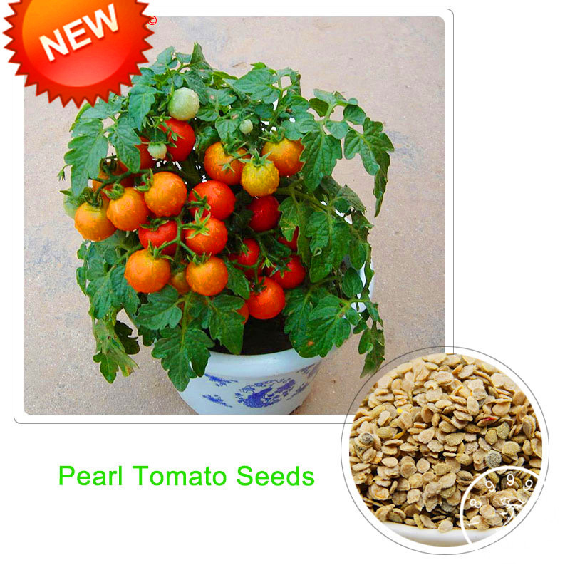 Best-Selling!Red Pearl Tomato Bonsai,Fruits and Vegetables Potted Mini Tomato Plants Balcony for Home Garden 100 Pcs/lot,#ZJ441Best-Selling!Red Pearl Tomato Bonsai,Fruits and Vegetables Potted Mini Tomato Plants Balcony for Home Garden 100 Pcs/lot,#ZJ441