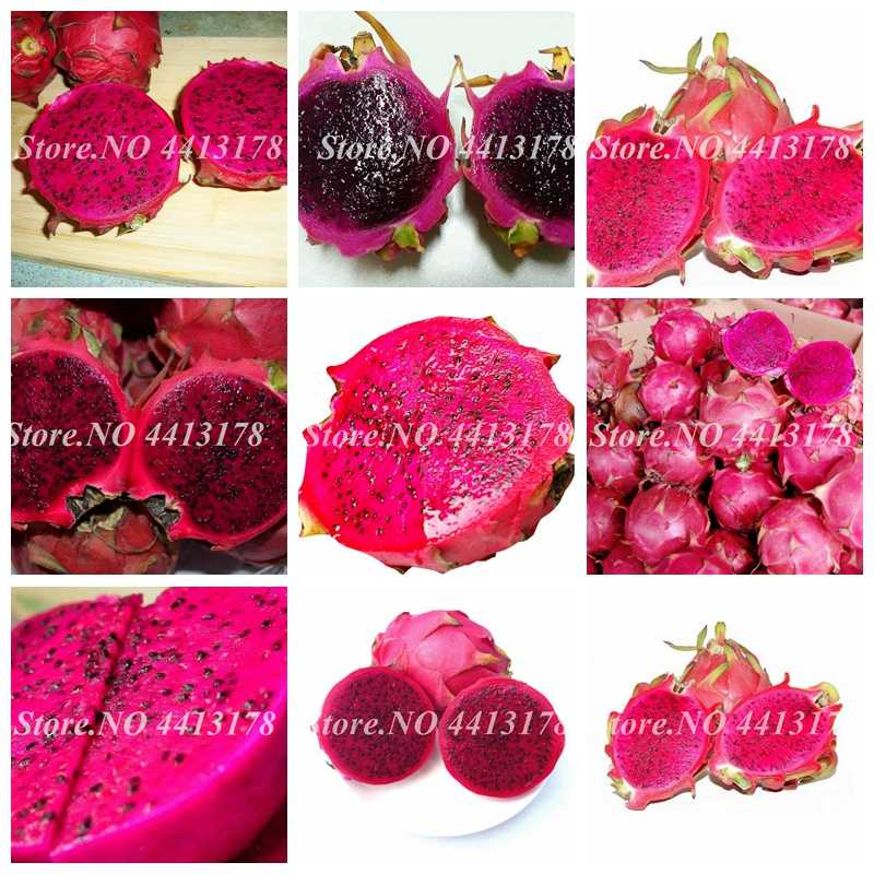 Rare Red Heart Pitaya Bonsai Very Delicious Fruit Tree Perennial Dragon Fruit DIY Home Graden Drawf Potted Tree 1000 pcs/ bag