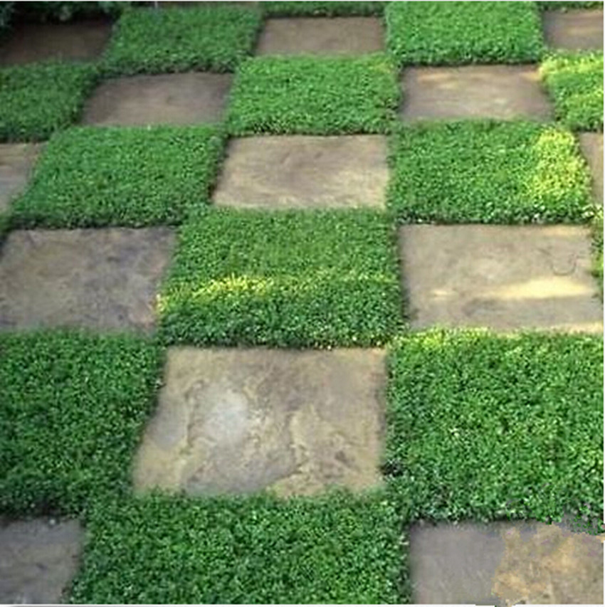 Cheap Ground Cover Online Get Cheap Ground Cover Green Aliexpress  Alibaba Group