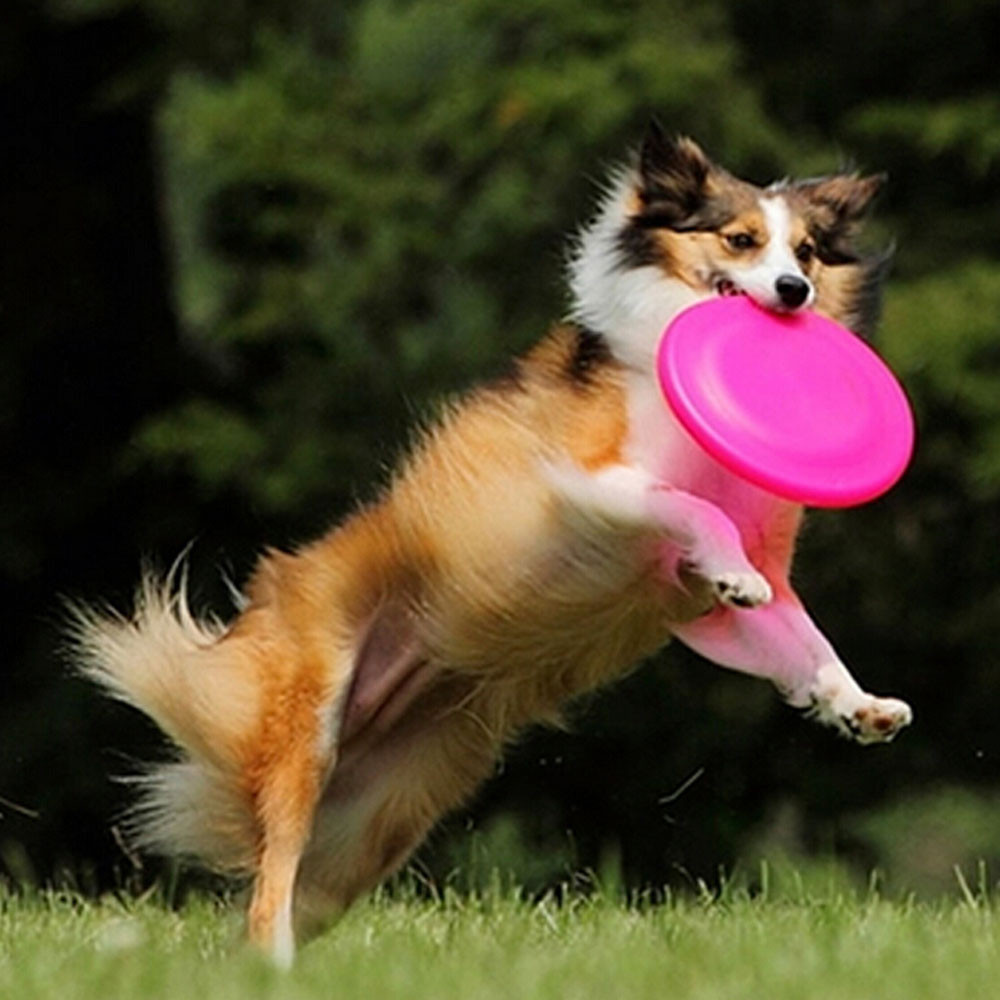 Flying Disc Outdoor Eco-friendly Silicone Rubber Dog Frisbee Pet Tooth Resistant Fetch Toys Puppy Training Playing Toy Int Aug30