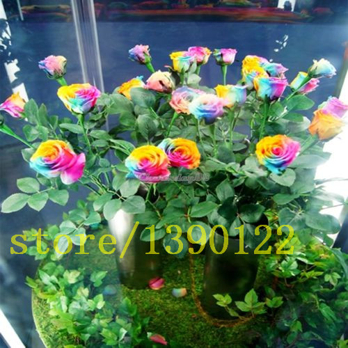 Online buy wholesale rainbow rose seeds from china rainbow for Where can i buy rainbow roses