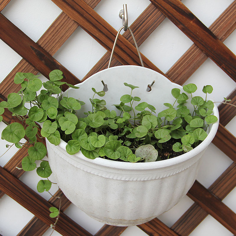 Aliexpress.com : Buy Plant Flower Pot Planter hanging pot ...