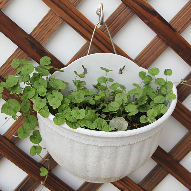 Aliexpress Com Buy Plant Flower Pot Planter Hanging Pot