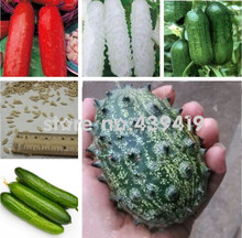 Balcony cucumber seeds 100%true cucumber seeds varieties complete green fruits and vegetables - 50 pcs(China)