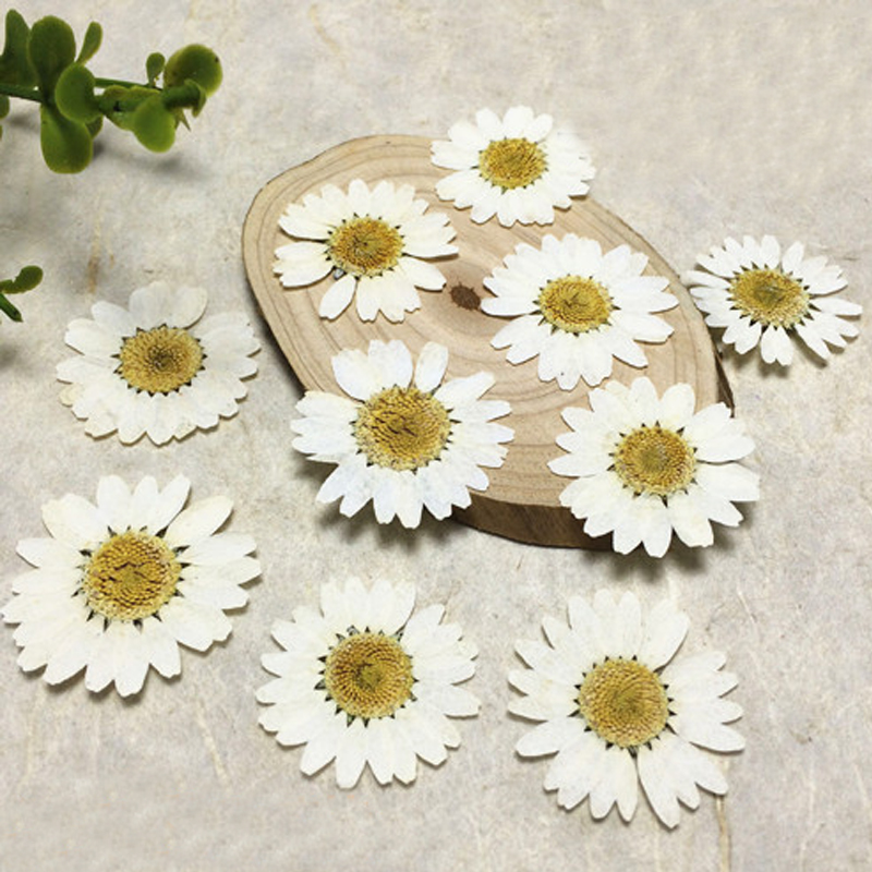 Flores dried pressed White Chrysanthemum Wedding Decoration flower wholesale free shipment 1 pack 30 Pcs