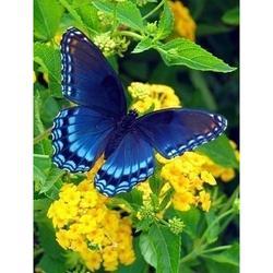 ABKM Горячая 5D 30x40 см полная площадь Алмазная картина изображение горного хрусталя Алмазная вышивка цветок с бабочкой