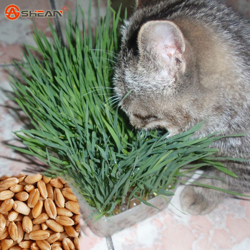 Online Buy Wholesale Growing Grass Seed From China Growing Grass