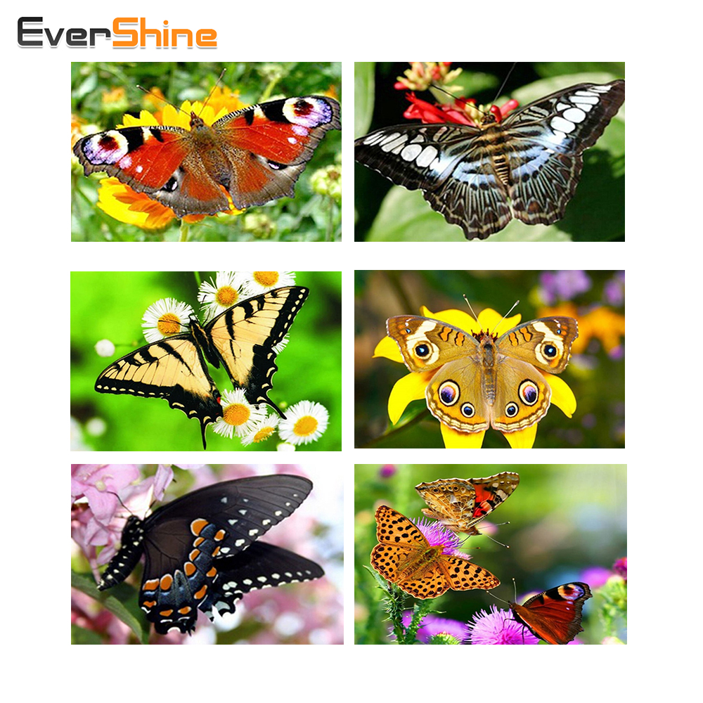 EverShine, Butterfly, Diamond Broderi Måleri, Djur, Needlework, Hantverk, Present DIY, 5D, Square, Diamond Mosaic, Cross Stitch, Kits