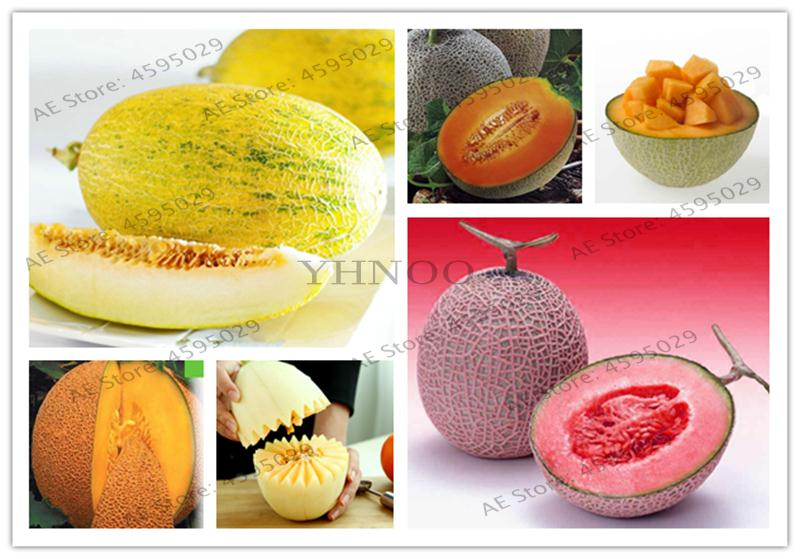 50pcs Cantaloupe Melon Vegetable Delicious Fruit Honey Dew Green Plant Flesh Great For Home Garden