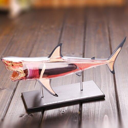 Dentista Dental del laboratorio de gran tiburón blanco anatomía ...