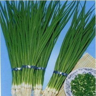 free shipping 50pcs/bag Four seasons spring onion seeds for DIY home garden