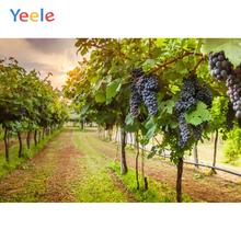 Yeele Orchard Grape Fruit Tree Field Summer Vintage Photography Backgrounds Customized Photographic Backdrops for Photo Studio