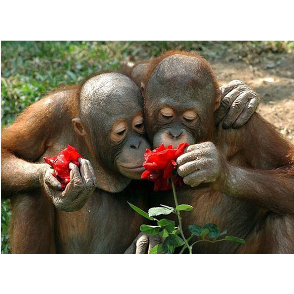 Демотиваторы обезьянки любовь