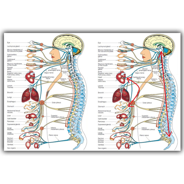Human Science Human Body Organs Medical Knowledge Silk Poster