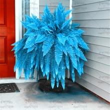 100 Pcs/Lot Blue Bracken Fern Bonsai Plants Rare Fiddlehead Succulent Potted Plant DIY for Home Garden Decoration Easy to Grow