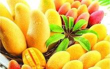 2016 Hot mango fruit seed seed mango tree bonsai garden plants DIY potted plants 2 / tablets