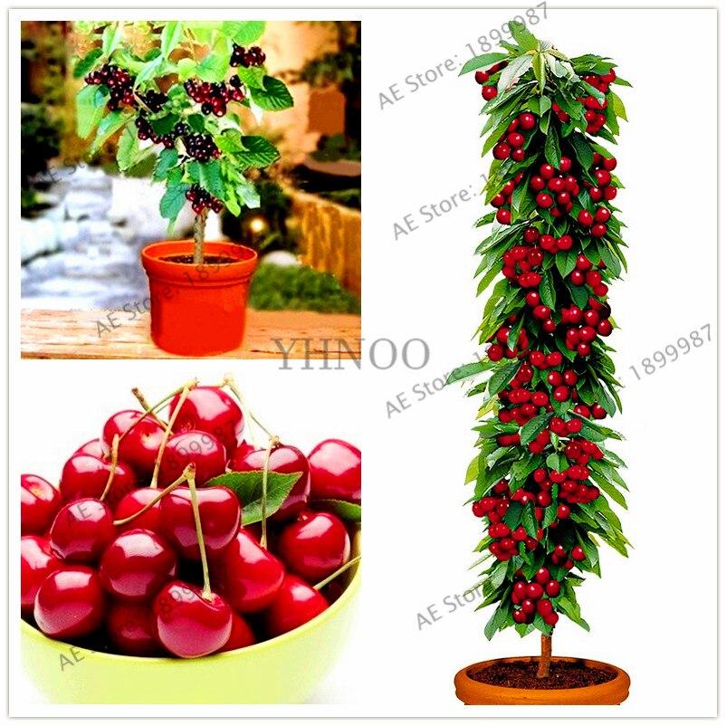 Big Sale!mini Cherry Tree Plants Cherry Bonsai Tree Plantas Dwarf Cherry Tree Fruit Flores For Home&garden 20pcs/bag