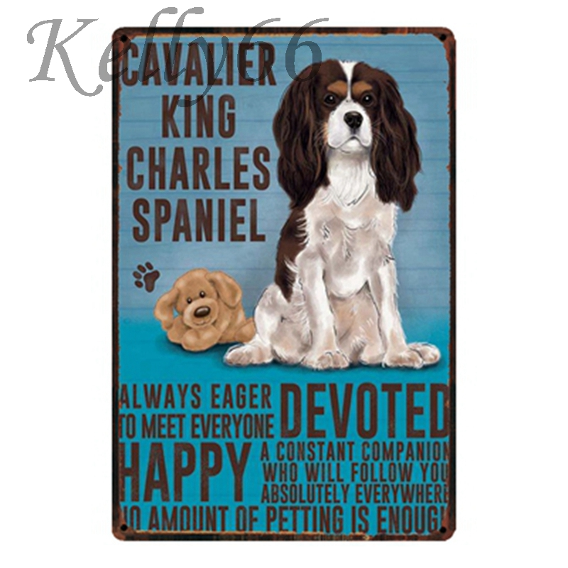 CAVALIER KING CHARLES SPANIEL…