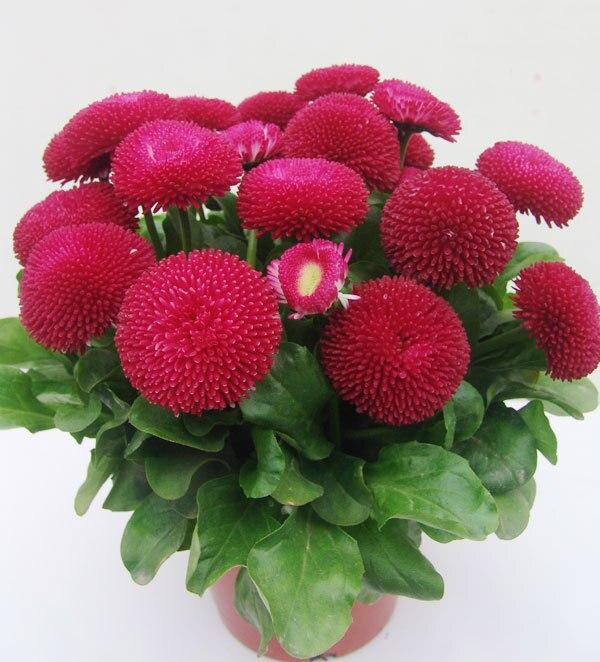 Заказ комнатные цветы семенами оптовые цены подарок женщине в день рождения екатеринбург интернет магазин