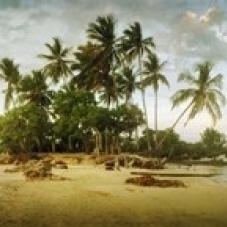 Palm trees on the beach in Morro De Sao Paulo  Tinhare  Cairu  Bahia  Brazil Poster Print (30 x 13)