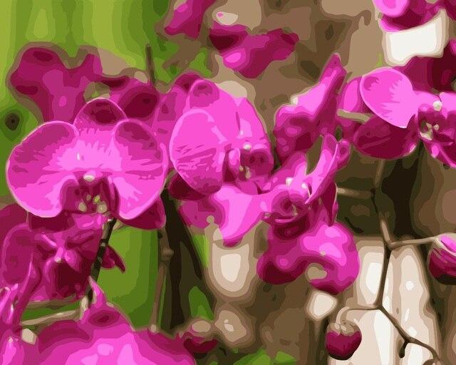 Mahuaf i038 falena orchidea diy pittura by numbers fiori dipinti a ...