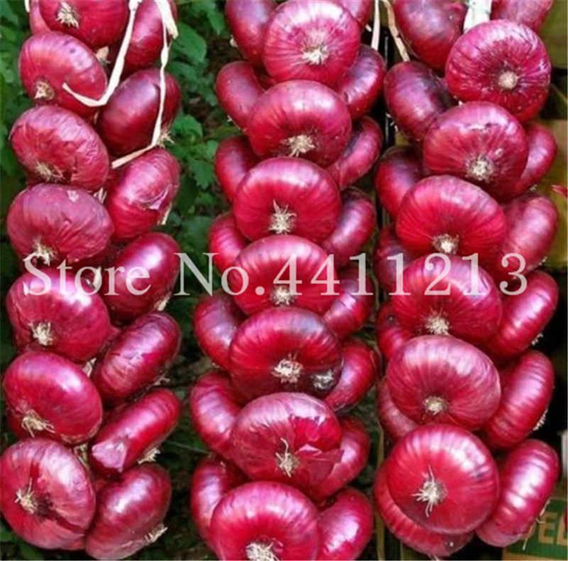 100 قطعة بونساي البصل الحلو الإسبانية النباتات الخضروات إنبات 95% المعمرة غير المعدلة وراثيا البصل لحديقة بونساي محطة سهلة إلى تنمو