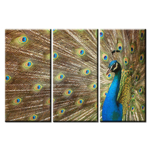 DW29 3 Pcs Animal Peacock Canvas Prints Painting Modern Artist Blue Peacock Open Screen Wall Art Home Decorative Painting