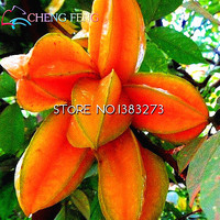 2016 Real Seed 15pcs/lot Carambola (averrhoa Carambola) Seeds Delicious Fruit Seeds Of Non-transgenic Home Garden Free Shipping