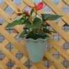 High Quality 6 Colors Hanging Flower Pot Hook Wall Pots Resin Flower Holder Balcony Garden Planter