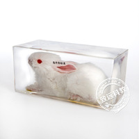 Real Rabbit Specimens In Clear Lucite Block Educational Instrument Middle school biology School teaching aids Teaching