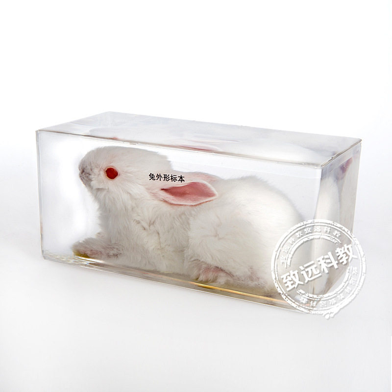 Real Rabbit Specimens In Clear Lucite Block Educational Instrument Middle school biology School teaching aids Teaching fishbone fispecimens in clear lucite block educational instrument middle school biology school teaching aids