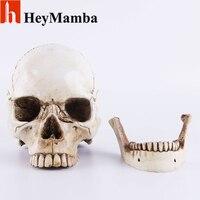 HeyMamba Decoration Skull Statue Lifesize 1:1 Resin Human Skull Replica Medical Model Figurine