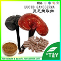 Manufacturer sales reishi mushroom extract capsule 500mg*400pcs
