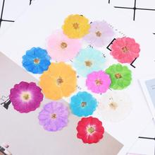 120pcs Pressed Dried Flower Chinese Rose Filler For Epoxy Resin Jewelry Making Postcard Frame Phone Case Craft DIY