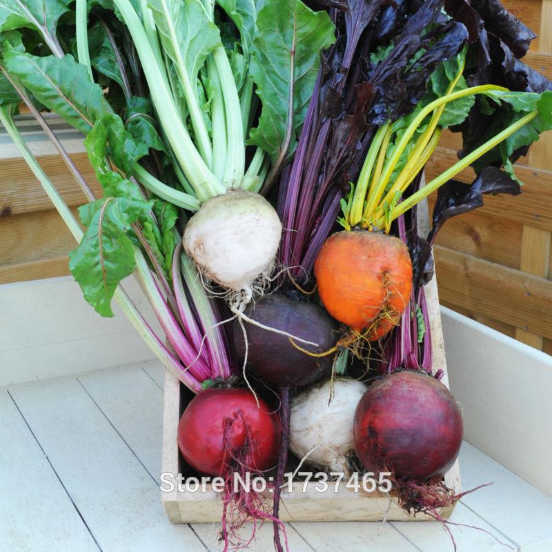 Imported real seed,1 gram/bag Beetroot , Beta vulgaris