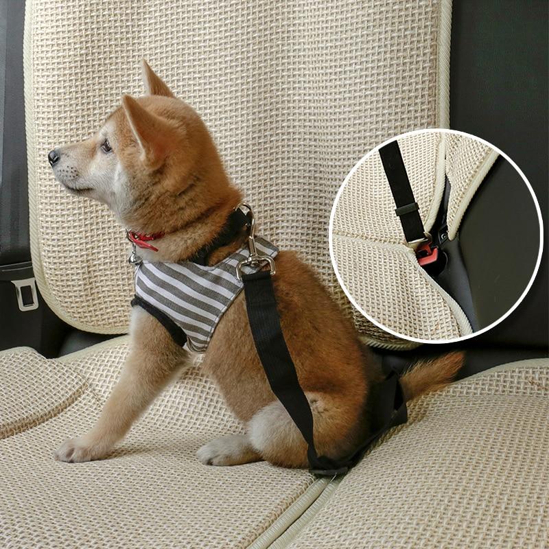 attache voiture chien